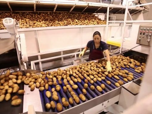 Washington Potato Growers