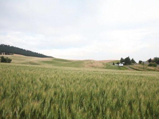 Washington Grain Growers